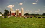 DairyFarm.png