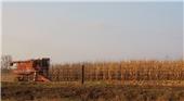 Iowa corn.png