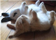 funnybunnies.png
