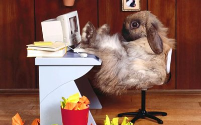 Rabbit Advisor