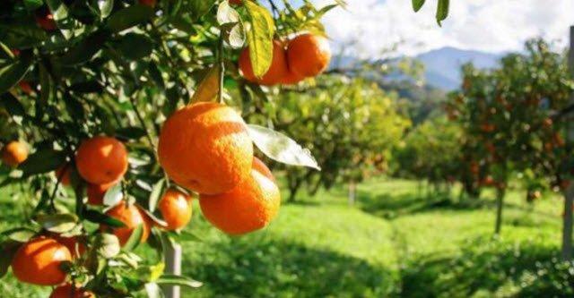 CST-Oranges