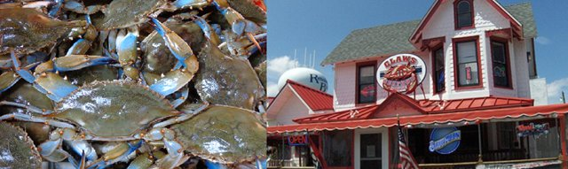 Blue_crab_at_Claws_Delaware